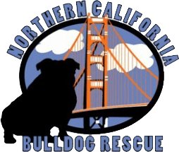 Northern California Bulldog Rescue Available Bulldogs page