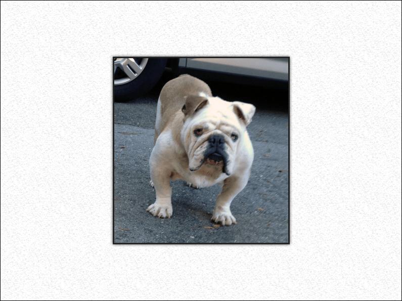 Wilbur – *Adopted*