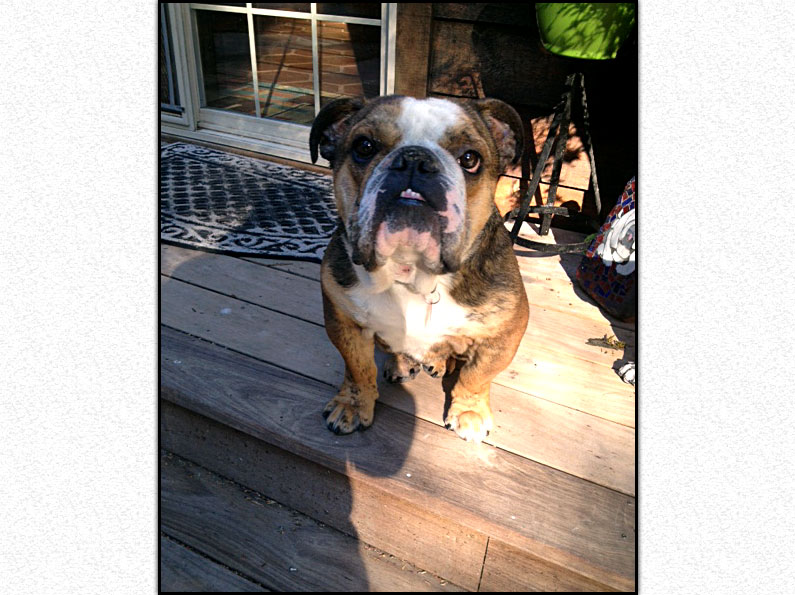 Charlie – *Adopted*