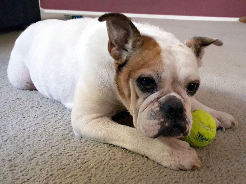 Gemma loves a tennis ball
