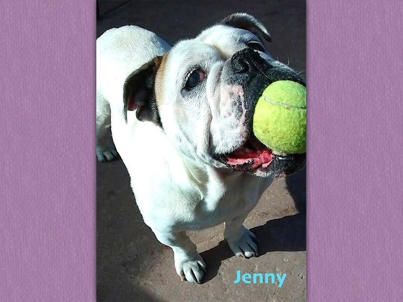 Jenny – *Adopted*
