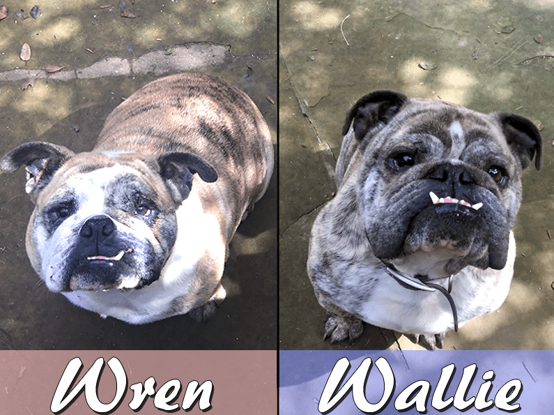 Wallie and Wren – Adopted