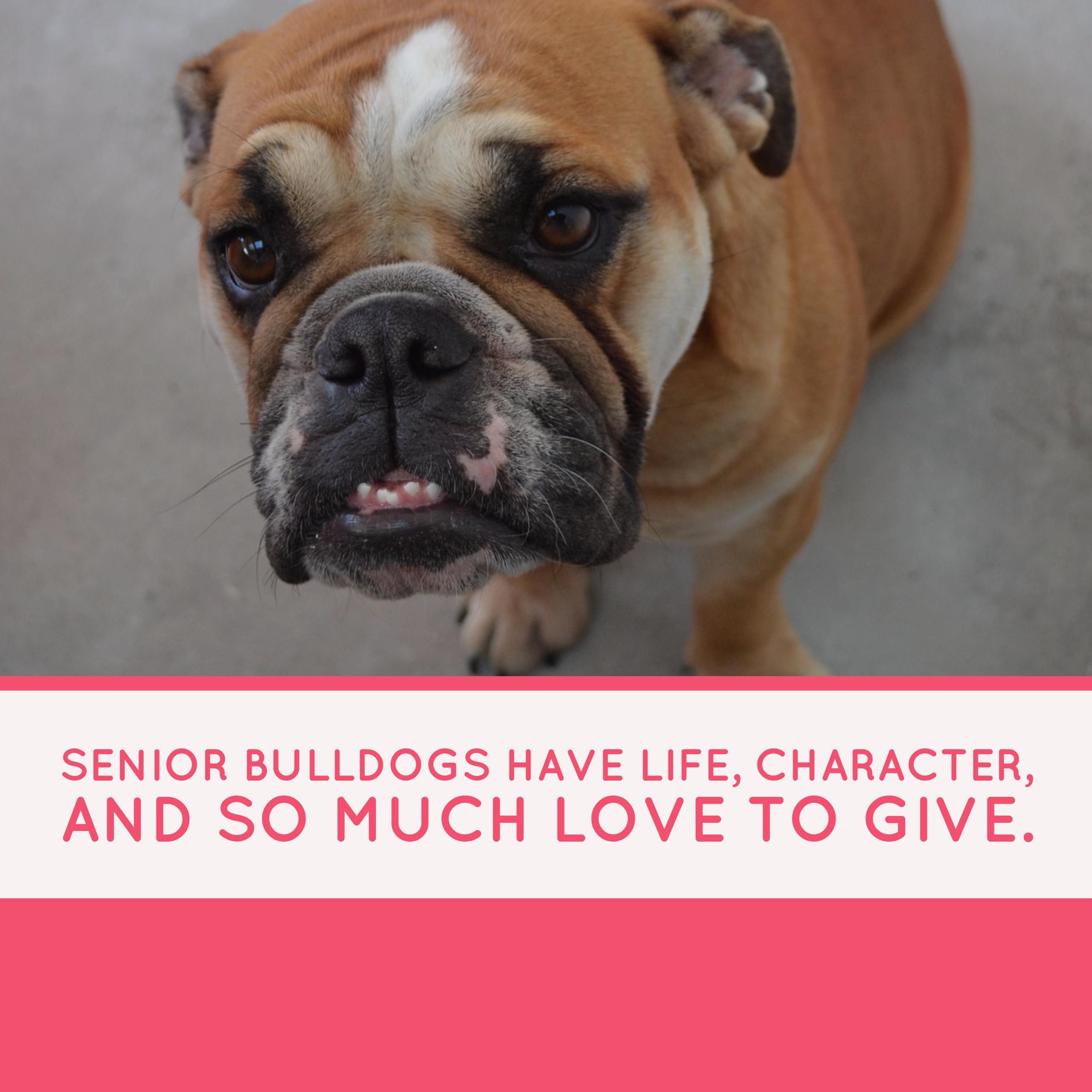 Senior Bulldogs need love too.