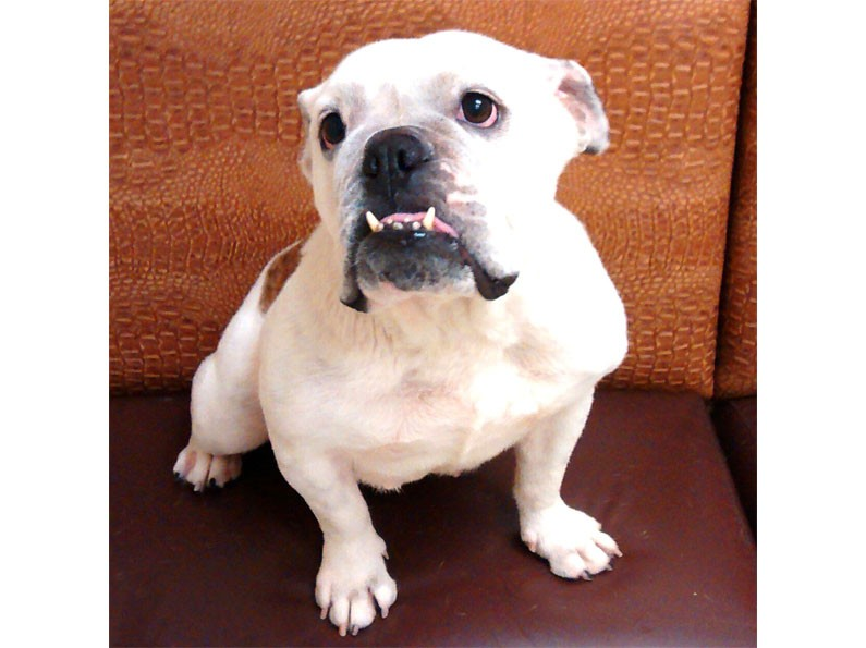 Norcal Dog Rescue